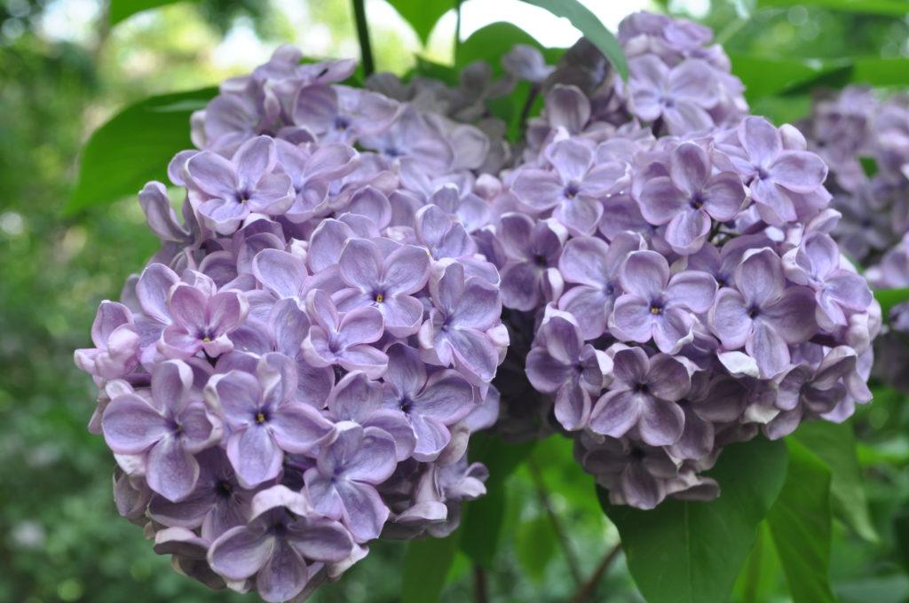 Все цветет в саду Никольском!